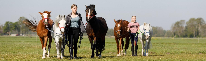 Paarden buiten